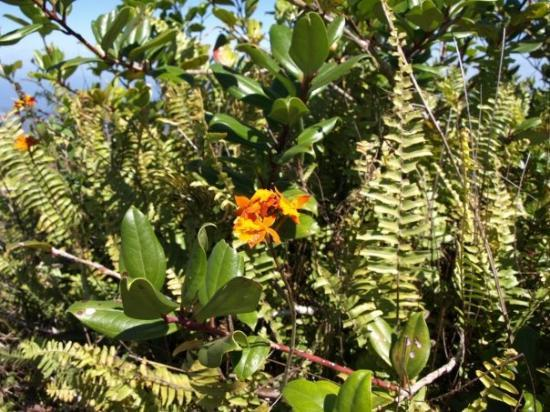 Mombacho Volcano : Reserva Natural Volcán Mombacho: beautiful flowers like bromelias, orchids,..