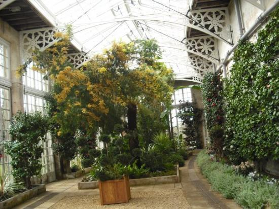 Woburn Abbey and Gardens: interiour of the Camelia House