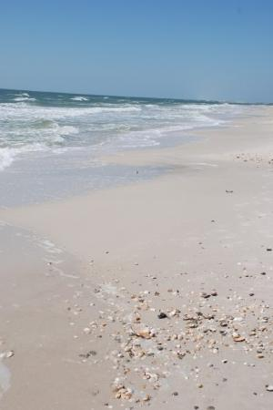 Dauphin Island Al Shells On The Beach