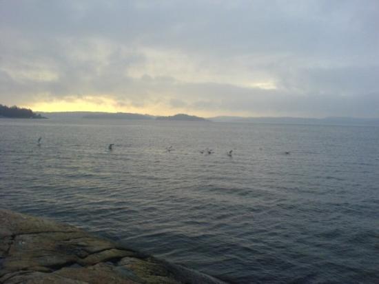 สเตนังซุนด์, สวีเดน: Finally the seagulls came as we left!