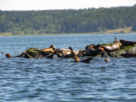 เซนต์แอนดรู, แคนาดา: zeehonden tijdens walvissafari