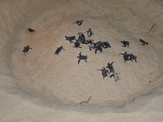 Нуси-Иранджа, Мадагаскар: nascita delle tartarughe