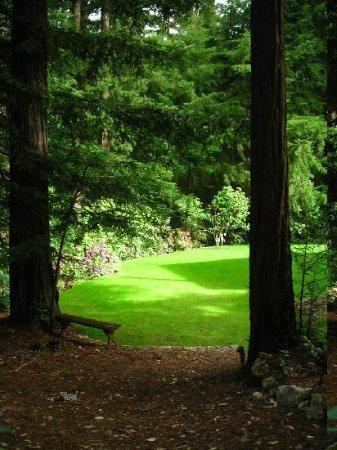 Redwood Croft: the garden