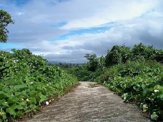 Tinian, Mariana Islands: Airfield with overgrowth
