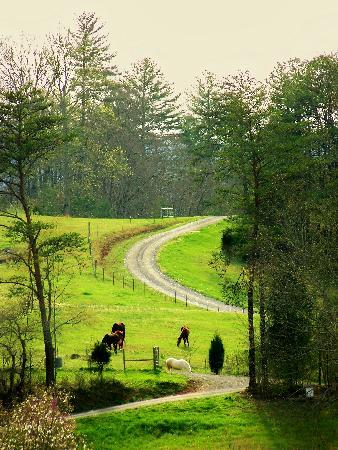 Country Manor Acres: This is the main drive through the property