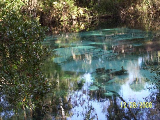 Juniper Prairie Wilderness: Springs