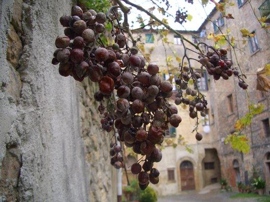 Пиза, Италия: 道になってるぶどう