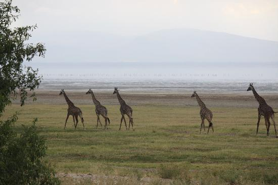 andBeyond Lake Manyara Tree Lodge照片