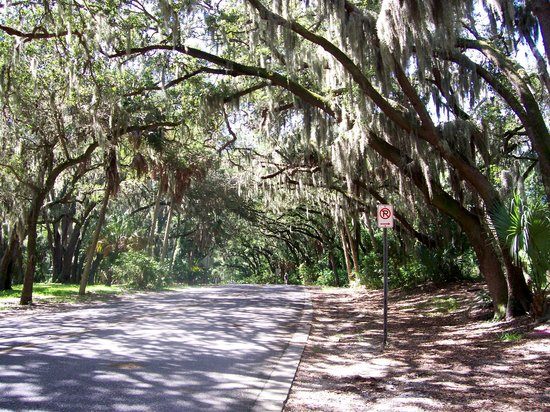 Safety Harbor, FL: beautiful shade trees