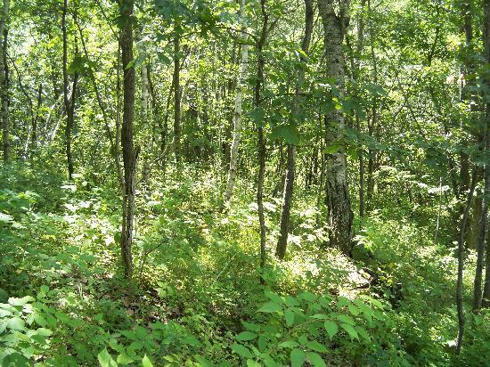 Percheron Paradise Romantic Hideaway: Surronding wooded area