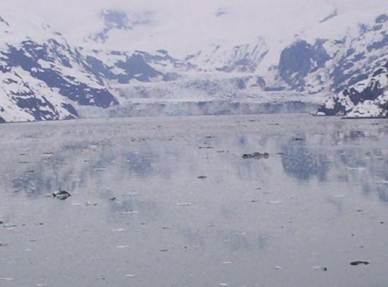 Portage Glacier: alaska glaicer