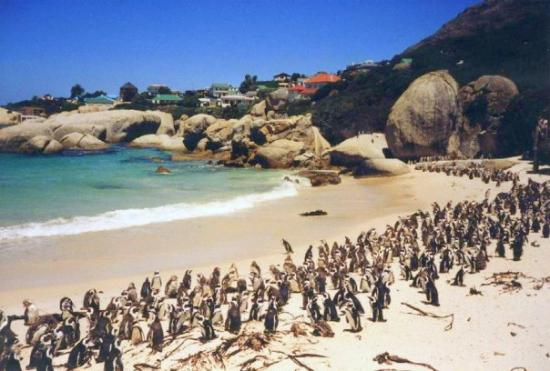 Things To Do in Cape Point