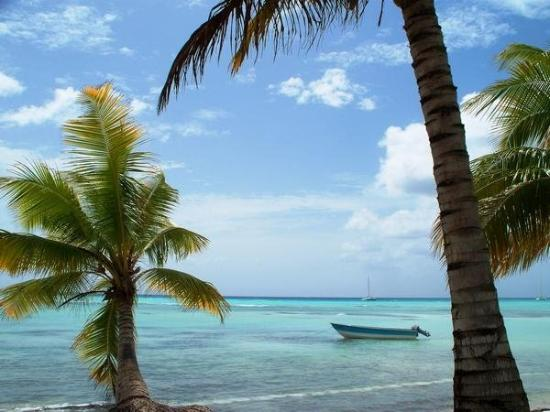 Isla Saona: Great picture from our Saona Island excursion