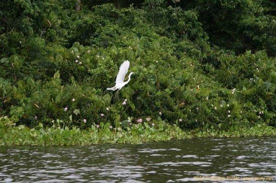 Delta Wildlife