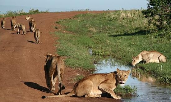 Serian Safari: NP Masai Mara, Kenya, 2006