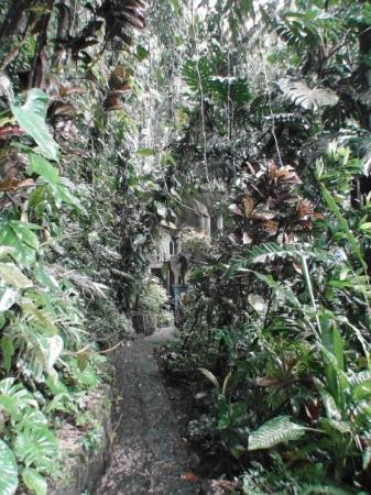 Xilitla, the Garden of Edward James
