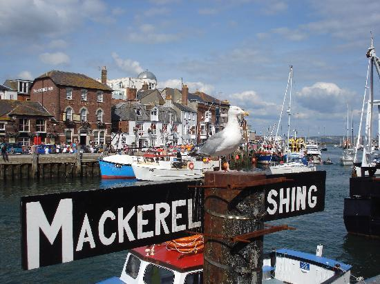 Γουέιμουθ, UK: Pretty Harbour (plus Seagull) in Weymouth, Dorset