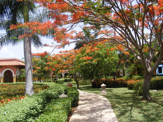 Playa Paraiso, Mexico: nice gardens all over the resort