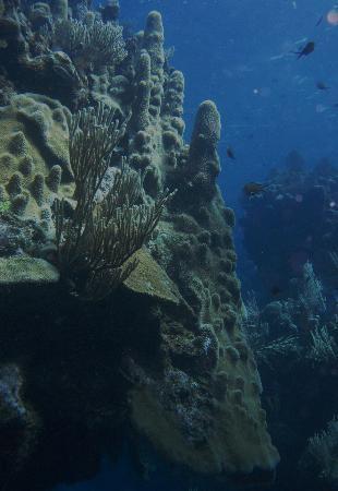 Turquoise Bay Dive Beach Resort Amazing Cs