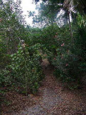 Garden by the Sea B&B: Path from B&B to town