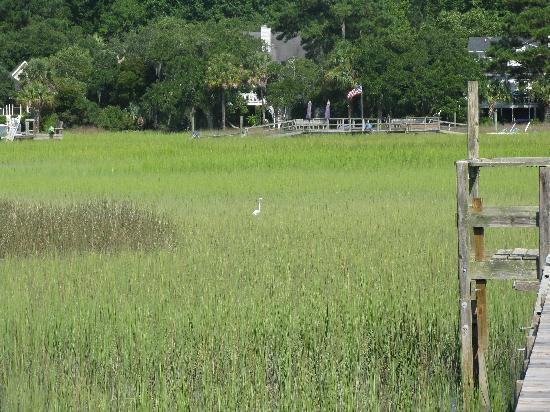 Plantation Oaks Inn: the marsh