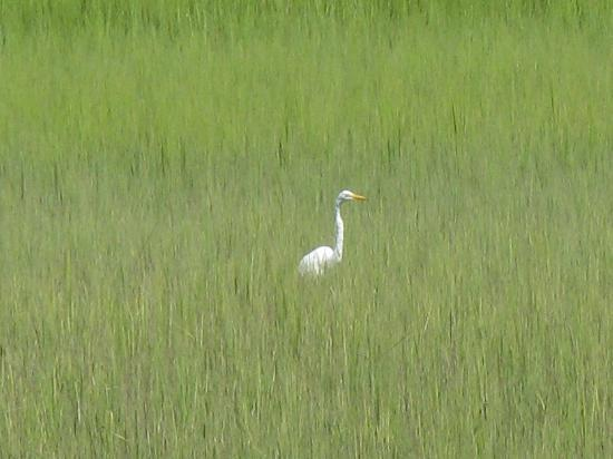 Plantation Oaks Inn: watching an egret after breakfast