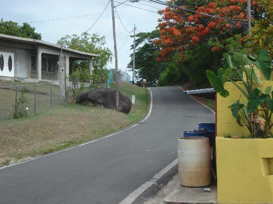 The Vieques Guesthouse: Charming views from the hotel