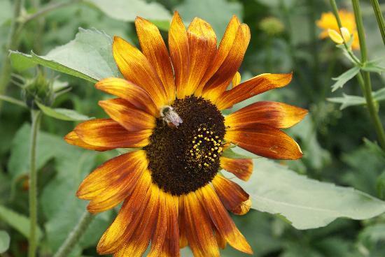 Georgeson Botanical Garden: Flowers