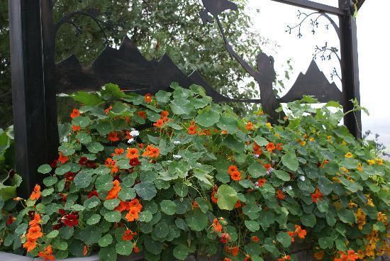 Georgeson Botanical Garden: Entrance to childrens garden