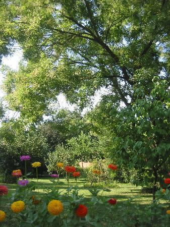 Casa Delser: fiori