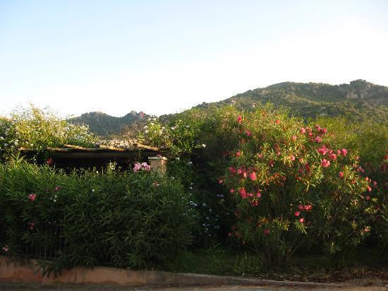 Cardedu, Italy: i bungalows immersi nel verde