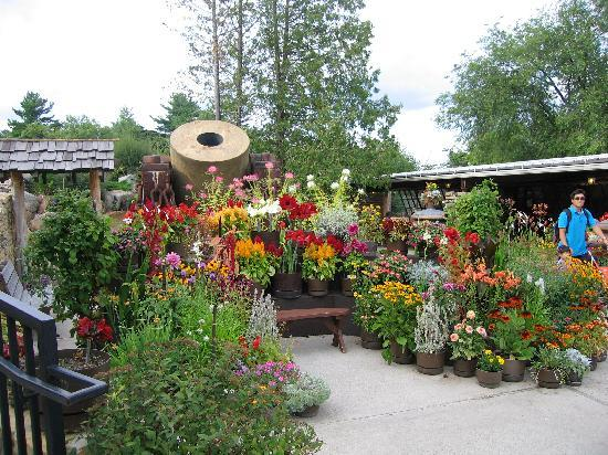 House on the Rock: Pretty Flowers in the Garden