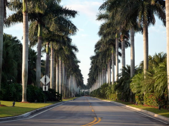 Coral Gables, Floride : Royal Palms just beyond Deering's entrance