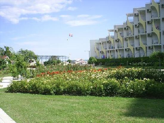 Hotel Laguna Beach: A wanderfull rose garden