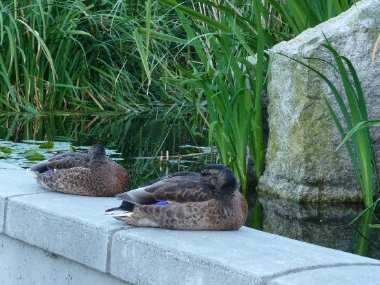 Even the ducks sleep well here.
