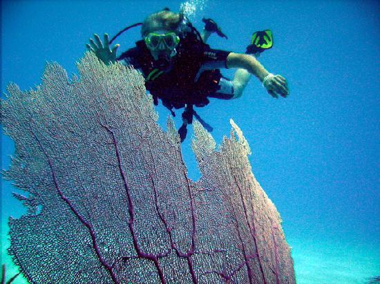 Reef Quest Divers: Au récif de Shangrila