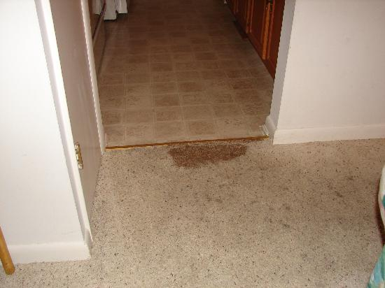 Sea Colony Resort : Stained carpet