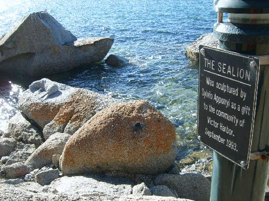 Granite Island: the sealion