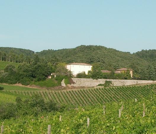 Hotel Villa La Grotta : Villa La Grotta nestled in the vineyard