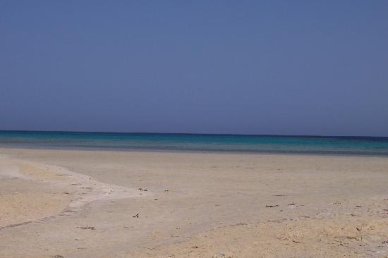 Gorgonia Beach Resort: sharm el luli