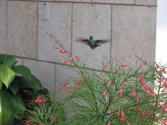 Villa Cristal: Hummingbird in the garden