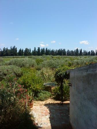 Villa Mimosa : Olive Grove