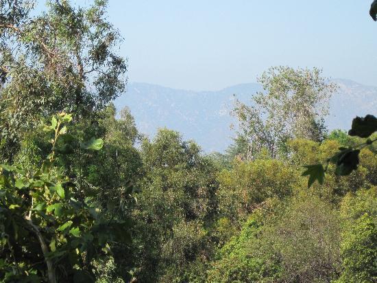 เบเวอร์รี่ การ์แลนส์ ฮอลิเดย์อินน์: View from balcony