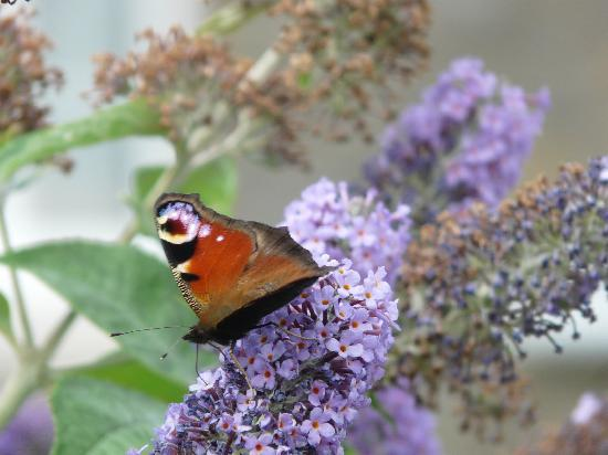 East Byermoor Guest House : ... more local wildlife