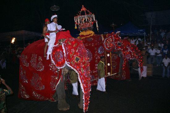 Villa Rosa: Perahera in Kandy, das größte buddhistische Fest der Insel im Juli/August