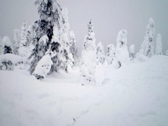 Nelson, Kanada: Powder