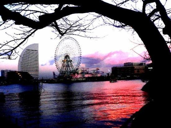 写真横浜市枚