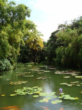 Jardin Botanique De Deshaies Basse Terre Guadeloupe Picture Of Guadeloupe Caribbean Tripadvisor