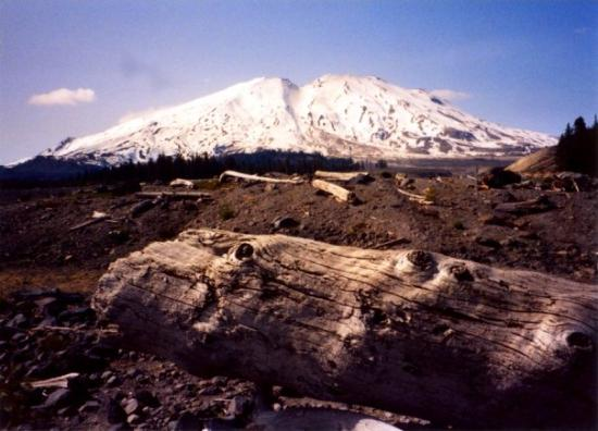 Mount st helens 1992 picture of cougar washington for Rental cabins near mt st helens