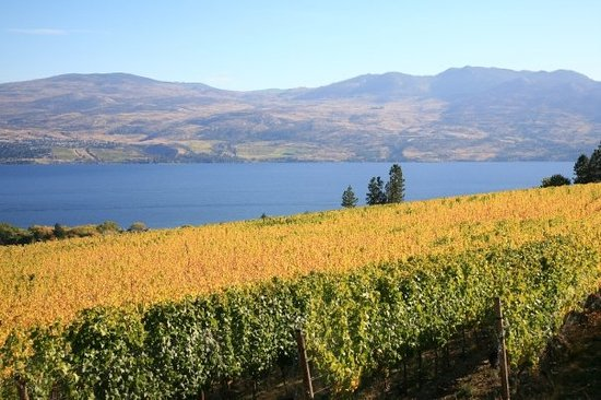 Penticton, Kanada: Miission Hilll vineyard